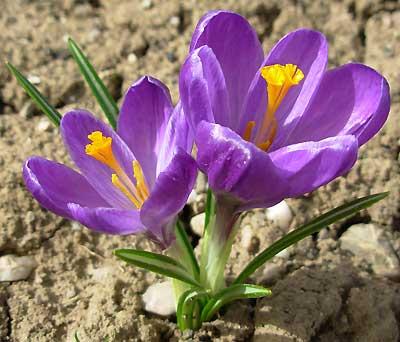 Flower Record. Автор фото: Елена Дзюненко